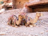 Camels by the rests of tombs.