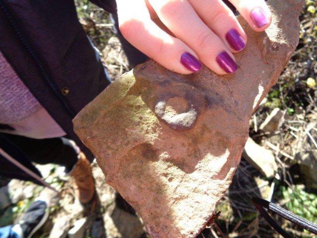 Zkamenělé ústí doupěte bezobratlého živočicha