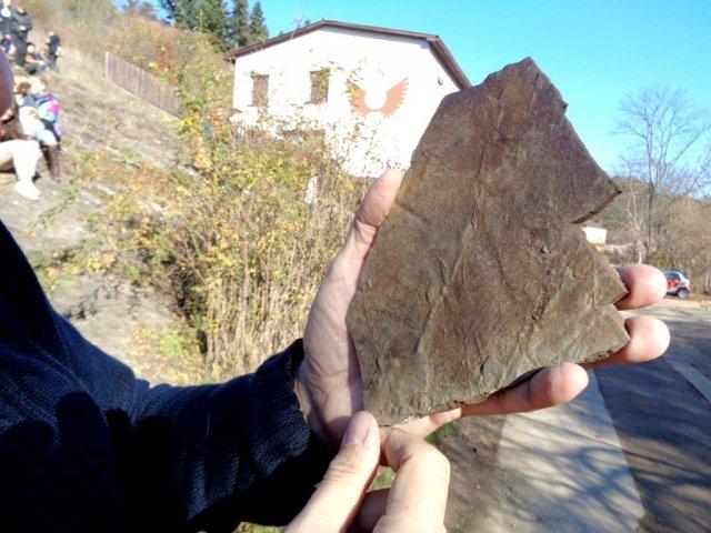 Vrypy vzniklé při plavání trilobita před 445 miliony lety